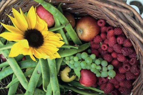 Vale Harvest.jpg